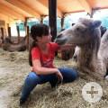 Ferienprogramm A12 Kamelreiten